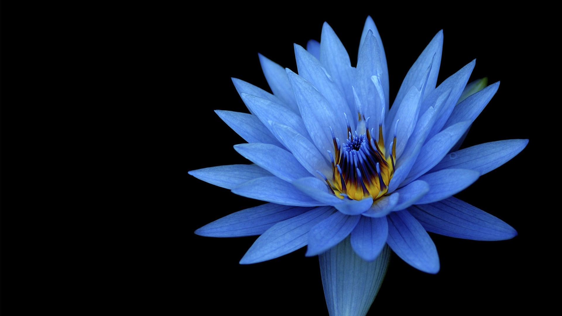 We've gathered more than 5 million images uploaded by our users and sorted them by the most popular ones. Sony Xperia Z Stock Blue Flower Wallpapers   HD Wallpapers
