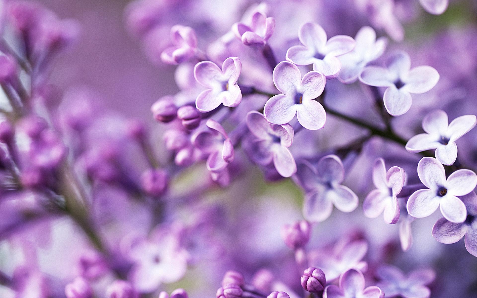 Spring Purple Flowers Wallpapers Hd Wallpapers Id 12714