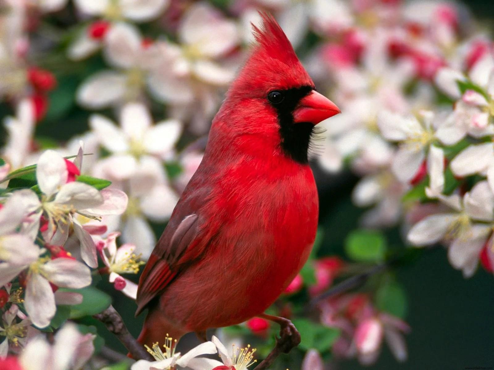 Cardinal Bird Home Decor
