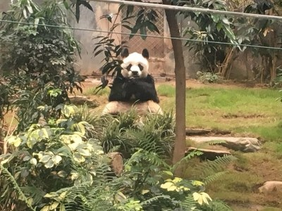 Ocean Park Hong Kong review panda