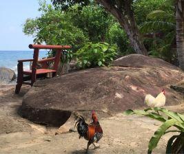 Tioman Simukut Hill View Garden 1