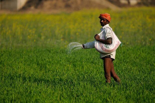 Urine can be used for fertilization of crops