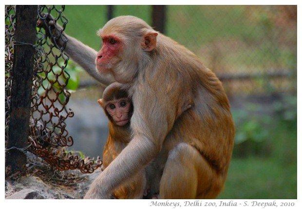 Delhi Police files an FIR against a Monkey