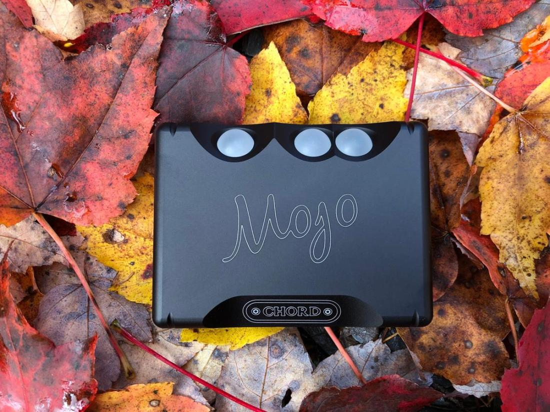 The Mojo nestled in fall leaves.