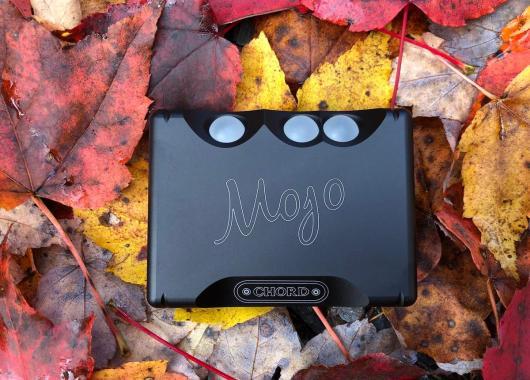 The Mojo nestled in fall leaves.