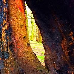 Tree Secrets