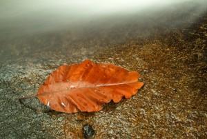 Mother Nature and Orange Leaf