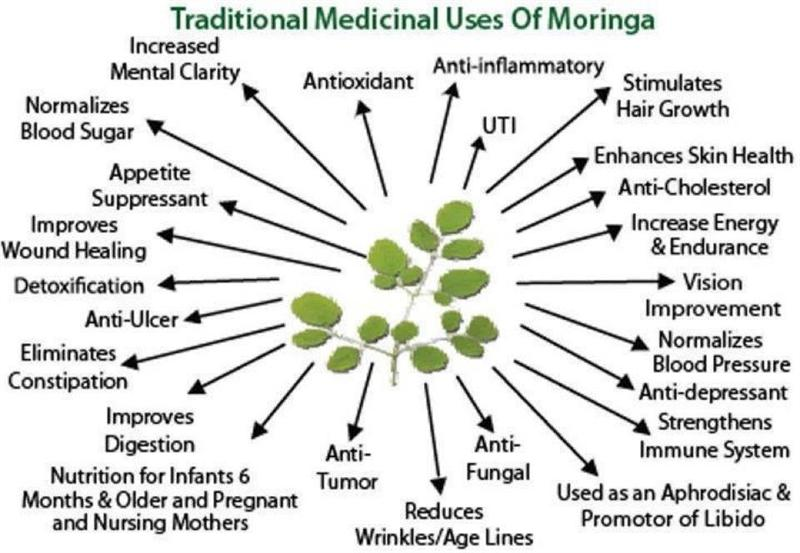 Image Result For Where Can I Buy Pure Tea Tree Oil