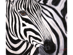 Zephyr - The Zebra by Karen T Hluchan
