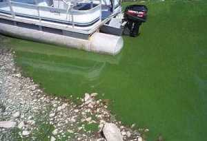 blue-green algae tips