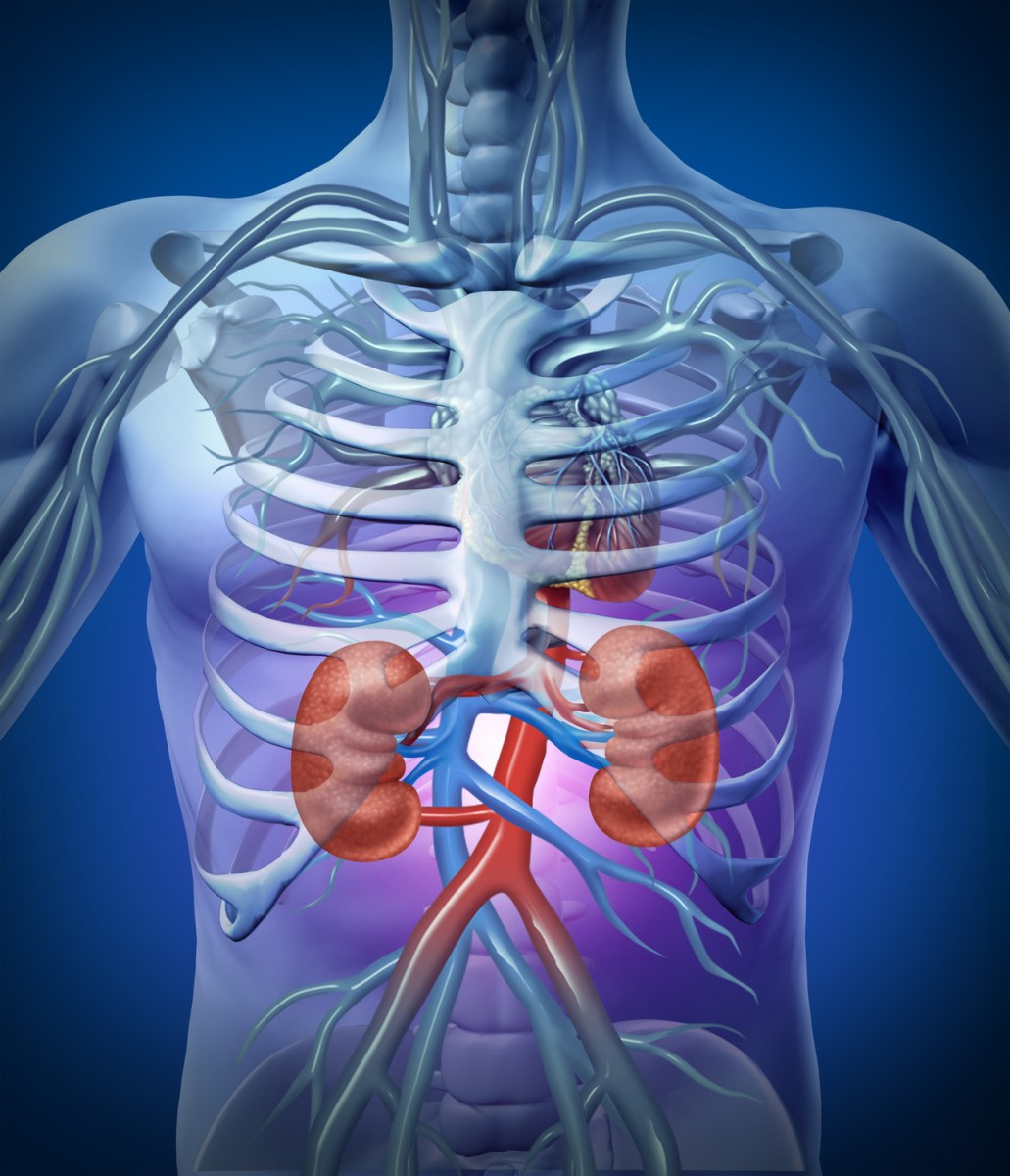 7 Habits that Damage the Kidney