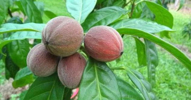Image result for This Fruit Destroys Cancer Within Minutes