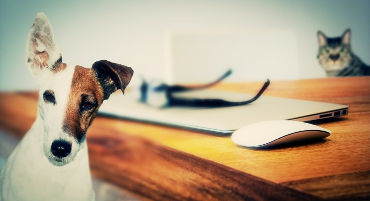 3 Home Remedies You Can Also Use on Your Pets!