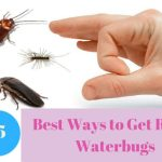 How to get rid of waterbugs