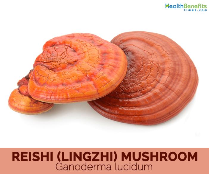 Reishi-Mushroom-Facts-and-health-benefits