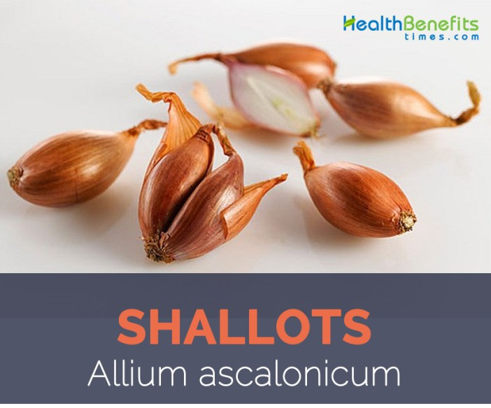 Shallot facts and health benefits