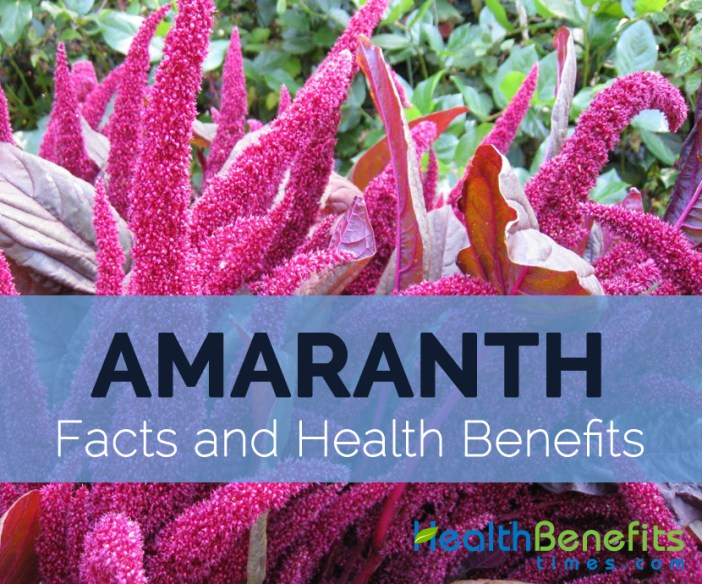 Amaranth-facts-and-health-benefits
