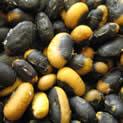 An Dunscaja Soybean