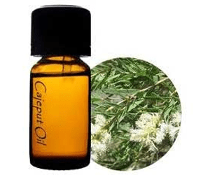 Health Benefits of Cajuput Essential Oil
