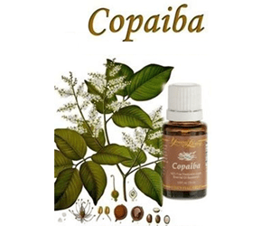 Health Benefits of Copaiba Essential oil