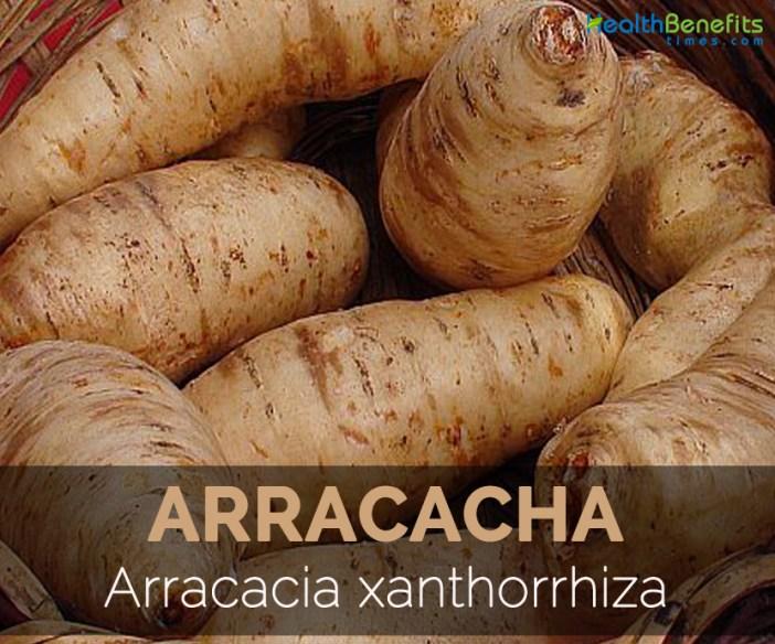 arracacha-arracacia-xanthorrhiza