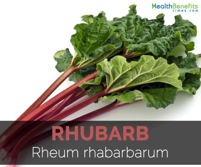 rhubarb-rheum-rhabarbarum