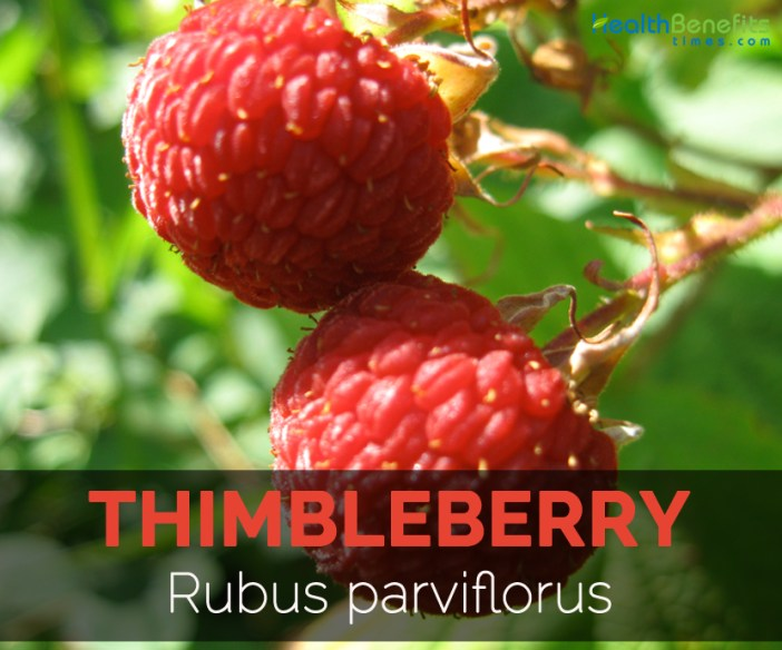 thimbleberry-rubus-parviflorus