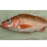 Stripe tail Rockfish