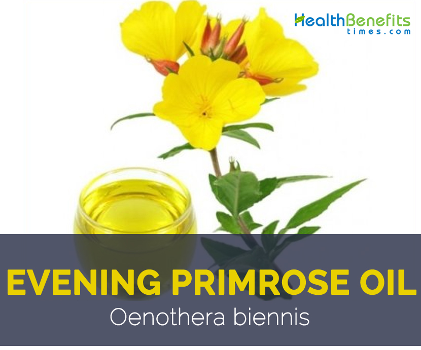 Evening Primrose Oil Facts And Health Benefits