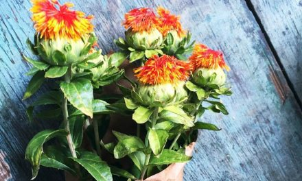 Safflower Oil for Weight Loss: Benefits and Side Effects
