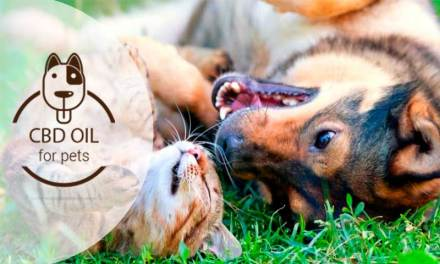 CBD for Pets: Keep them Healthy with Cannabidiol