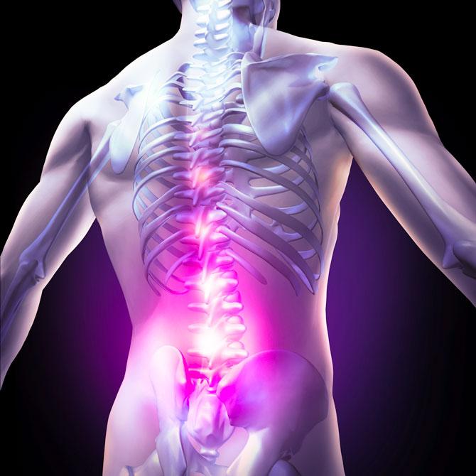 Human spine as seen through transparent human