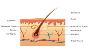 Acupuncture And Herbs Regenerate Hair For Alopecia Areata