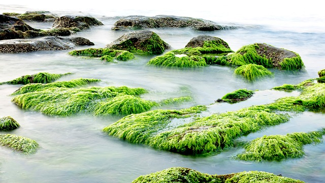 Seaweed in its natural environment