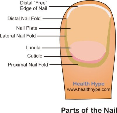 Longitudinal Ridges Fingernails Nail Polish Hand