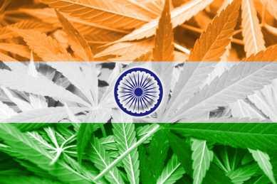 37089795 - india flag on cannabis background. drug policy. legalization of marijuana: Copyright: <a href='https://www.123rf.com/profile_promesaartstudio'>promesaartstudio / 123RF Stock Photo</a>