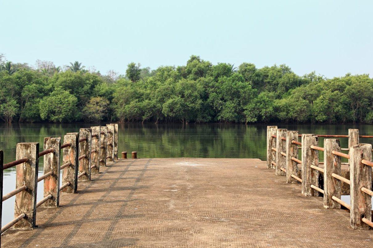 Mangroves concept.