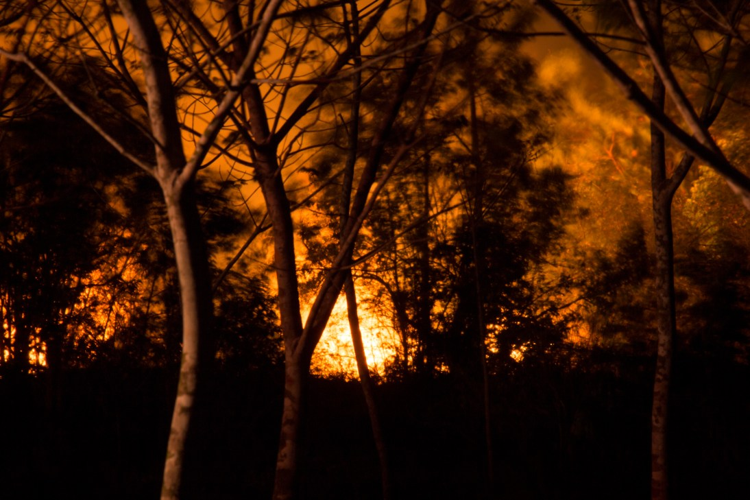 Wildfire at night. Natural disasters concept.