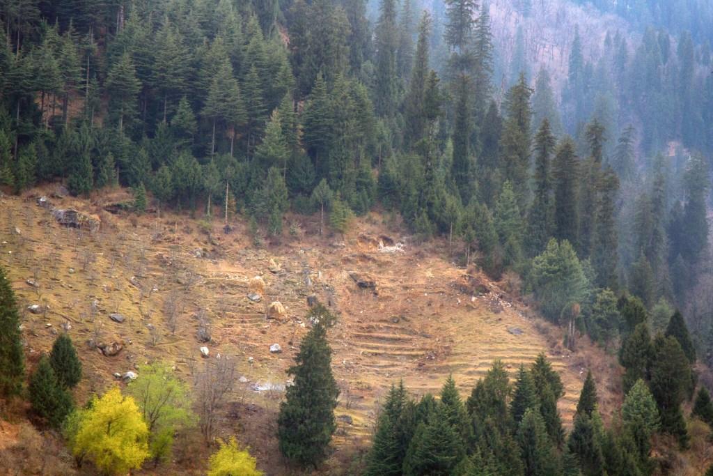 Deforestation Image ID: 115995103 (L)