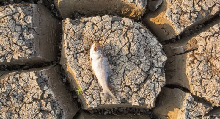 Died Fish in a dried up empty reservoir or dam due to a summer heatwave, low rainfall, pollution and drought in north karnataka,India.