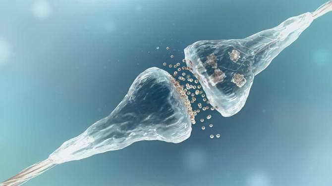 serotonin and ra