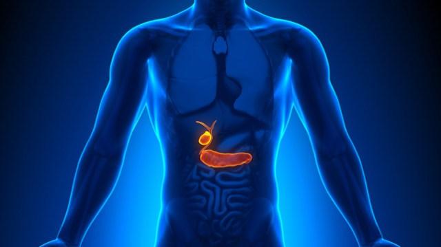 Image result for gall bladder