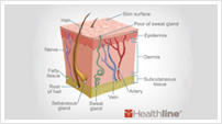 Medical drawing of the layers of human skin.