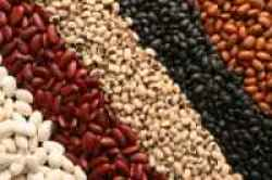 beans, foods to lose weight