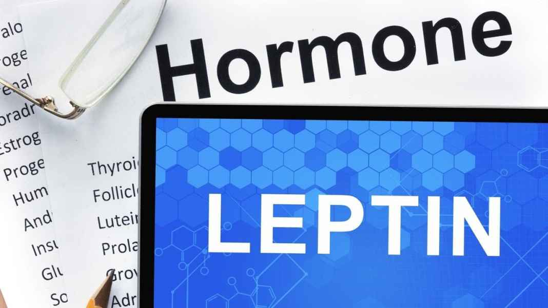 Leptin Rich Foods