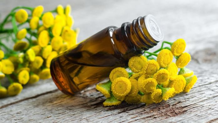 Tansy Essential Oil benefits