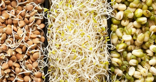 benefits of Sprouts for Weight Loss