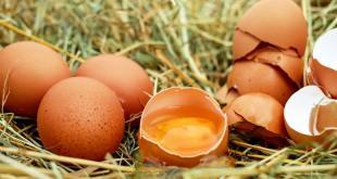 قشر البيض
