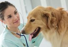 Termine in der Tiermedizin 2019