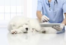 Digitale Tiermedizin, Digitalisierung, Tierarzt